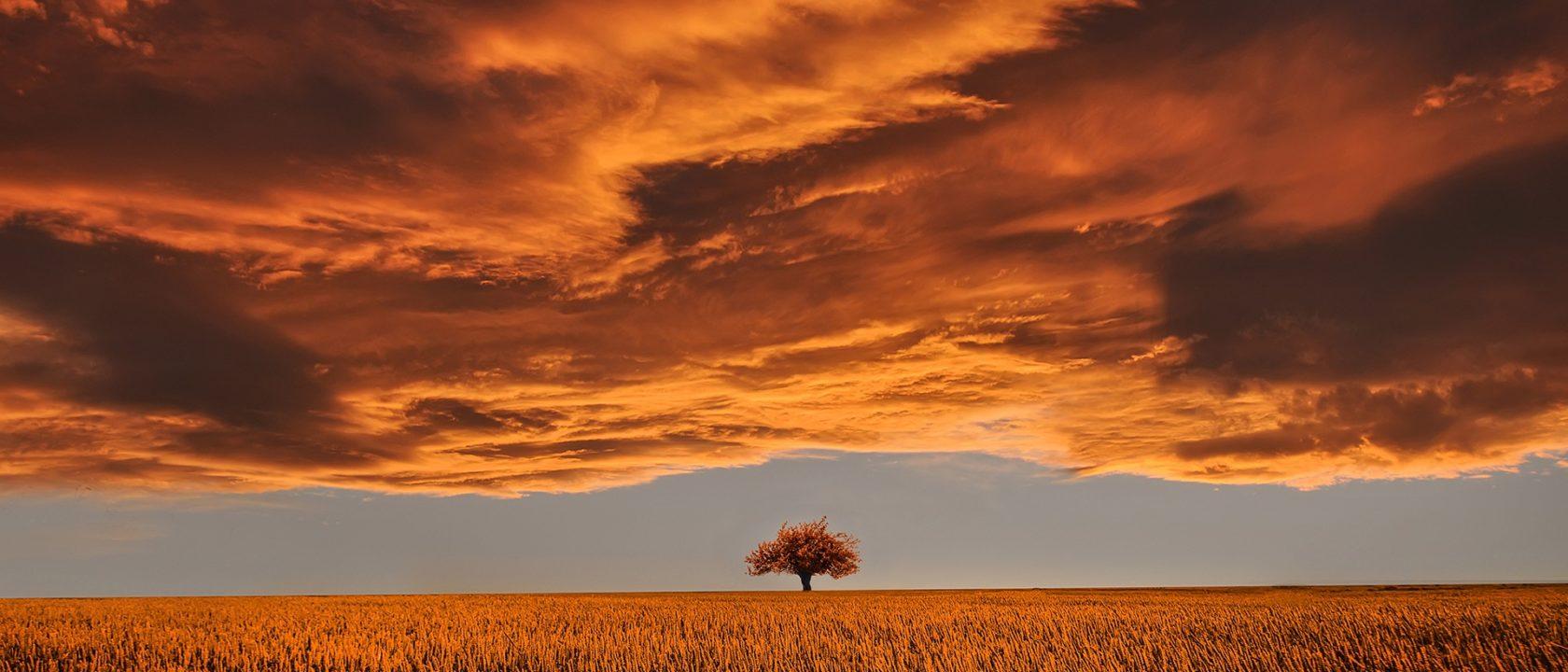 Uçsuz bucaksız arazide bir ağaç.